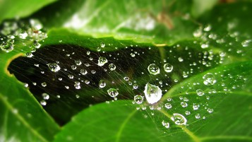 Gotas de agua sobre Spider Web wallpapers and stock photos