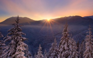 Winter Forest & Shiny Sunset wallpapers and stock photos