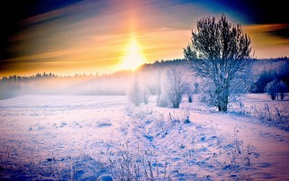 Winter Felder Trees Sunset Way wallpapers and stock photos