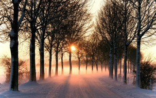 Snowy Road Bare Trees Sunny wallpapers and stock photos