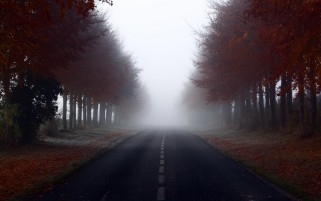 Random: Red Autumn Trees Road Foggy
