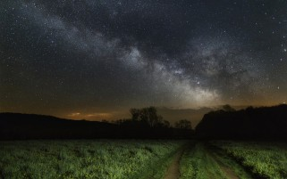 Meadow Path Dark Forest Night wallpapers and stock photos