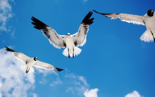 Seagulls Attack wallpapers and stock photos