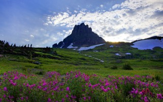 Green Hills Rocks Pink Flowers wallpapers and stock photos
