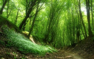 Green Forest Plants Path Sunny wallpapers and stock photos