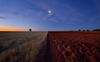 Arable Fields Sun Tree Sky wallpapers and stock photos