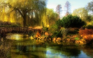 Plants Bridge Creek Trees Park wallpapers and stock photos