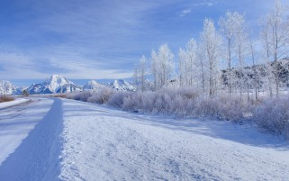 Gebirgsbaum-Schnee Field Road wallpapers and stock photos