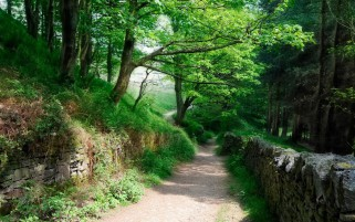 Lovely Forest Path Earth Wall wallpapers and stock photos