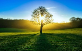 Green Field Trees Yellow Sun wallpapers and stock photos