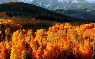 Golden Autumn Trees & Hills wallpapers and stock photos