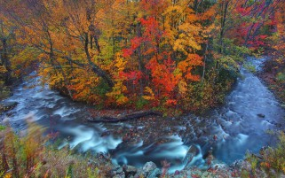 Autumn Forest & Wild Stream wallpapers and stock photos