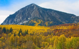 Mountain & Yellow Forest wallpapers and stock photos