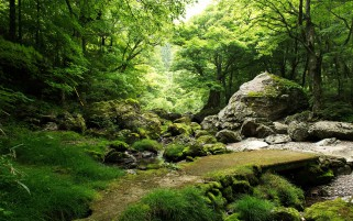 Lovely Trees Rocks Bridge Gras wallpapers and stock photos