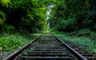 Green Trees & Rail Road wallpapers and stock photos