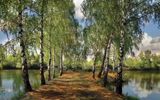 Birch Trees Lake Path Bench wallpapers and stock photos
