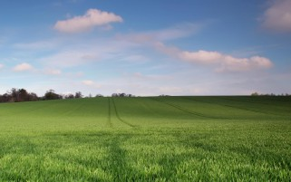 Green Pasture Trails Trees Sky wallpapers and stock photos