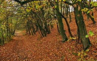 Dry Autumn Carpet Forest wallpapers and stock photos