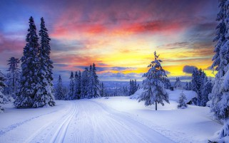 Winter Trees Snowy Road Sunset wallpapers and stock photos