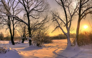 Snow Trees Field Trails Sunset wallpapers and stock photos