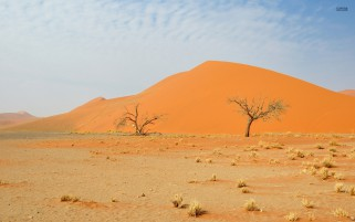 Pretty Namib Desert Trees Gras wallpapers and stock photos