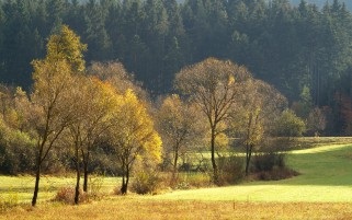 Green & Yellow Trees Fields wallpapers and stock photos
