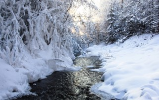 Lovely Snow Trees Cold River wallpapers and stock photos