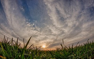 Fresh Grass Gray Clouds Sunset wallpapers and stock photos