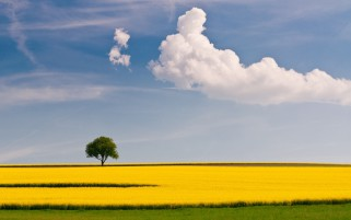 Yellow Green Field Tree Sky wallpapers and stock photos