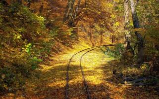 Rail Way Autumn Forest Sunny wallpapers and stock photos