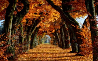 Orange Autumn Trees & Carpet wallpapers and stock photos
