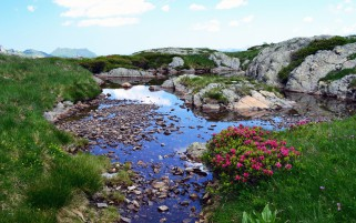 Nice Rocky Pond Flowers Grass wallpapers and stock photos