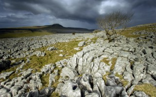 Lovely Rocky Field Trees Sky wallpapers and stock photos