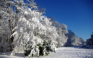 Random: Snowy Trees Field Blue Sky