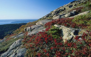 Red Flowers Cliffs Nice Ocean wallpapers and stock photos