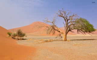 Pretty Trees Namib Desert wallpapers and stock photos