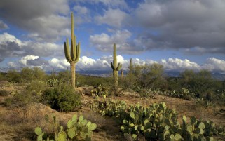 Pretty Cactuses Scenery & Sky wallpapers and stock photos