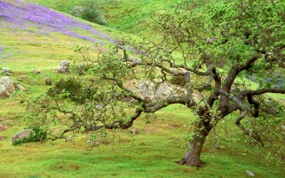 Hill Lilac Flowers Rocks Tree wallpapers and stock photos