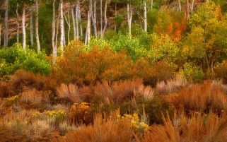 Gorgeous Autumn Trees & Plants wallpapers and stock photos