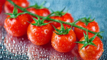 Fresh Cherry Tomatoes wallpapers and stock photos