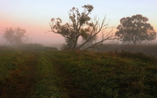 Random: Path Grass Trees Foggy Horizon