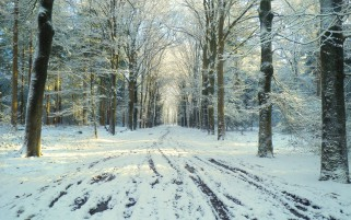 Nice Frozen Stream Forest Snow wallpapers and stock photos