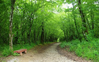 Grass Green Forest Bench Path wallpapers and stock photos