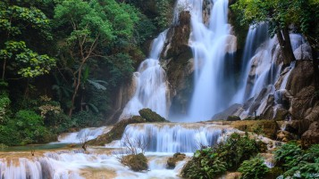 Lovely Waterfall Cascade Plant wallpapers and stock photos