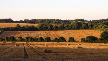 Stunning Hay Field Bales Trees wallpapers and stock photos