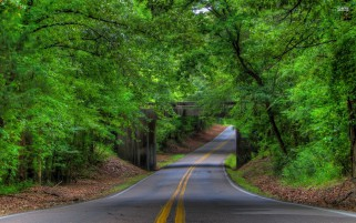 Green Forest Stone Bridge Road wallpapers and stock photos