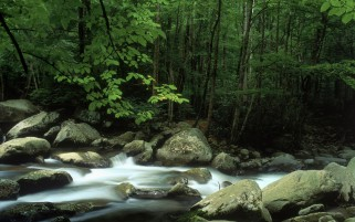 Forest Lovely Stream Rocks wallpapers and stock photos