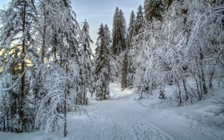 Nice Snowy Path Forest Sun wallpapers and stock photos