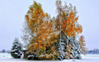 Leaved Trees Snow Field House wallpapers and stock photos