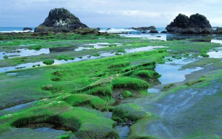 Grass Green Mossy Rocks Ocean wallpapers and stock photos